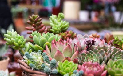 Go Green: Best Perennial Plants In South Africa