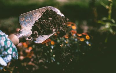 Top Tips On How To Use Organic Compost