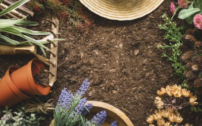 Differences Between Lawn Dressing And Topsoil