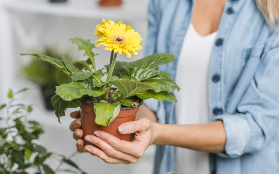 Top Tips For Planting In Pots With Potting Soil