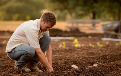 Benefits Of Using Wood Chips In Your Garden
