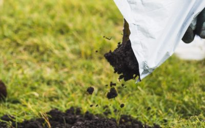 7 Ways Mushroom Compost Will Improve Your Soil