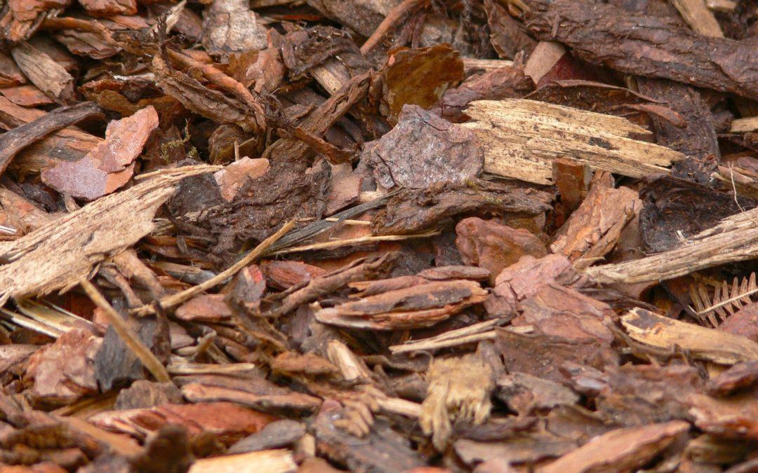 The Benefits of Bark Mulch in your Garden
