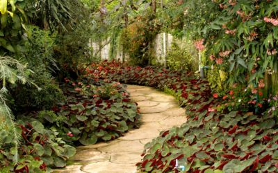 Landscaping tips – Get your Garden from Good to Great!