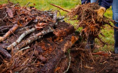 Hügelkultur: Sustainable low maintenance garden beds