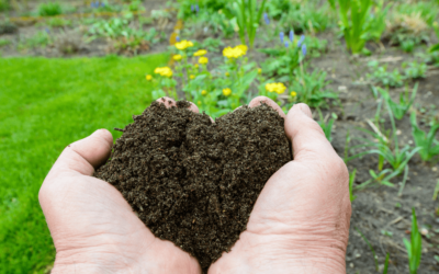 Organic Mushroom Compost – Great for your Garden!