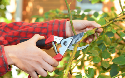 Pruning Your Trees Has Benefits – Part 1