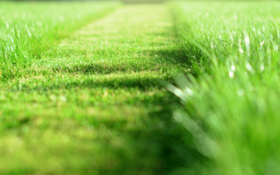 How To Look after and Maintain your Green Grass