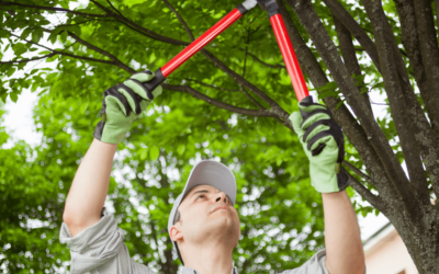 Pruning Your Trees Has Benefits – Part 2