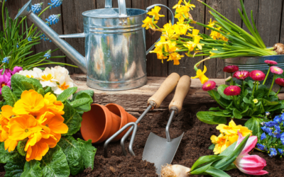 What is the Difference Between Growing Plants in Pots and in the Ground?
