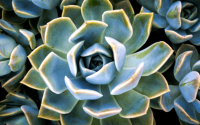 Succulents are Easy to Care For