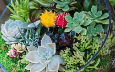 Different types of Succulents for Beginners